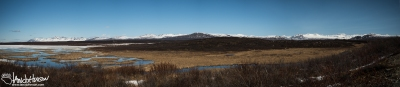 This panorama captures an active melt pond. The ice that was left concentrated many shorebirds and waterfowl in the open water.