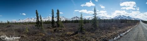A sprawling mountain vista juxtaposed to the Denali Highway.